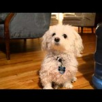 The Awkward Life of a Dog – Ben Engel (Feat. Rex Engel)
